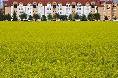 Цветя поле рапса стоковая фотография rf
