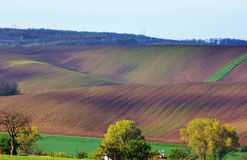 Цветя поле весны Стоковые Изображения