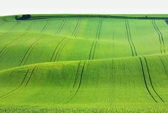 Цветя поле весны Стоковые Фотографии RF