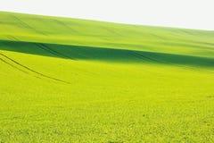 Цветя поле весны Стоковое Изображение RF