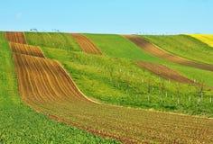 Цветя поле весны Стоковые Изображения RF