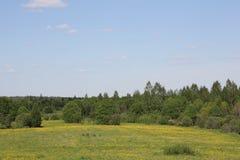 Цветя поле стоковое фото rf
