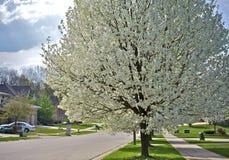 Цветя пригороды стоковое фото