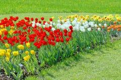 цветя сад желтый цвет много тюльпанов весны фото вертикальный Стоковые Изображения