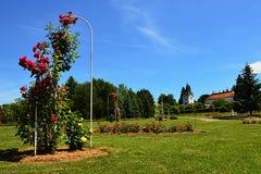 Цветя своды красной розы декоративные в rosarium дендропарка Mlynany, Словакии Стоковое Изображение