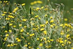 цветя трава Стоковое фото RF