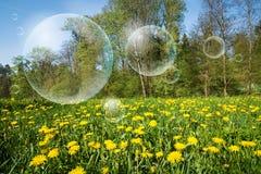 Цветя луг и пузыри летая Стоковое Изображение RF