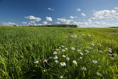 Цветя луг Стоковые Фотографии RF