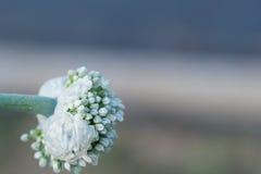 Цветя лук Стоковое Изображение