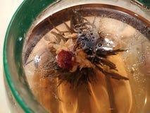 Цветя цвести зеленое китайское фото макроса травяного чая стоковые изображения rf