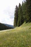 Цветя alm седловины Kartitsch в Австрии стоковое фото