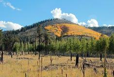 Цвет Аризона падения около flagstaff Стоковые Изображения