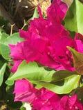 Цвет Аризоны Стоковые Изображения