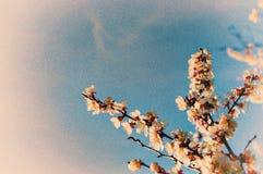Цвет весны Стоковое фото RF