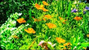 Цвет в жизни Стоковое фото RF