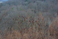 Цвет в однообразном ландшафте Стоковое фото RF