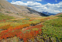 Цвет в ряде Sawatch, горы осени Колорадо утесистые, США Стоковые Фотографии RF
