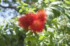 Цвет дерева Стоковое Фото