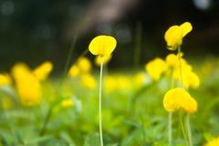 Цвет лета Стоковая Фотография RF