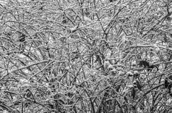 цвет зимы стоковые фотографии rf