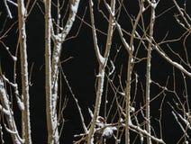 цвет зимы стоковая фотография