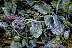 цвет зимы Стоковые Фото