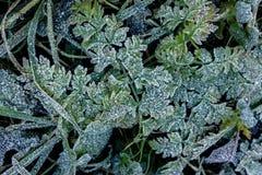 цвет зимы стоковое изображение rf