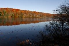 Цвет листьев осени Стоковое Изображение RF
