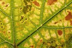 Цвет лист осени Стоковое Изображение RF