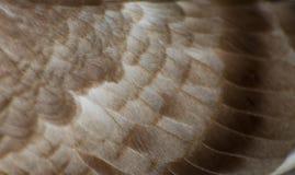 цвет коричневого цвета картины пера голубя предпосылки Стоковые Фотографии RF
