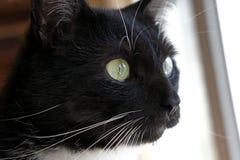 Цвет кота Стоковые Изображения
