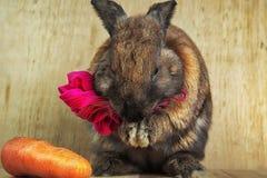 Цвет кролика краснокоричневый Стоковые Фотографии RF