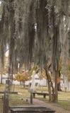 Цвет кладбища падения Стоковая Фотография