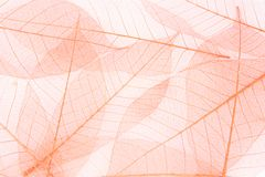 Цвет лист волокна красивый стоковое фото rf