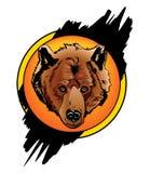 цвет медведя Стоковые Изображения