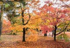 Цвет осени выходит на висок Tofukuji в Киото, Японию стоковое фото