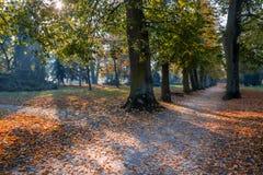 Цвет осени в парке стоковая фотография rf