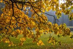 Цвет осени в парке стоковое изображение
