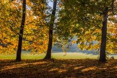 Цвет осени в парке стоковое фото rf