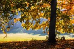 Цвет осени в парке стоковые фото