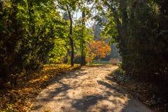 Цвет осени в парке стоковая фотография