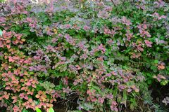 Цвет осени, сад Стоковое Фото