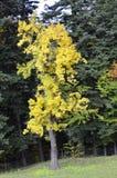 Цвет осени Стоковая Фотография RF