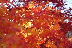 Цвет осени Стоковые Фото
