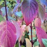 Цвет осени Стоковые Изображения RF