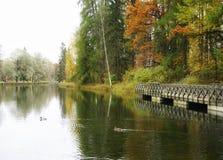 цвет отражения воды неба деревьев природы сада парка озера внешний зеленый Стоковые Изображения