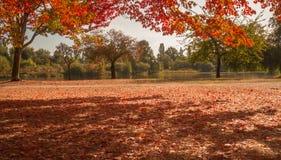 Цвет падения на парке Стоковое Изображение RF