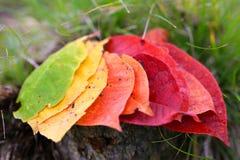 Цвет падений Стоковые Фото