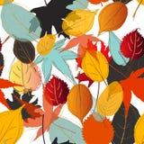 Цвет падения картины лист Стоковая Фотография RF