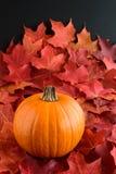 Цвет падения - кленовые листы и тыква стоковое фото rf